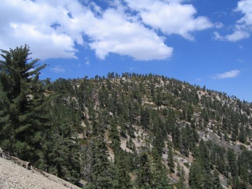 Mt. Williamson1